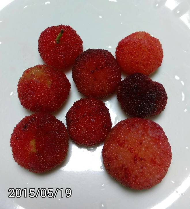 楊梅、樹梅的果實、fruits of Myrica rubra, Chinese Bayberry, Japanese Bayberry, Red Bayberry, Yumberry, Waxberry